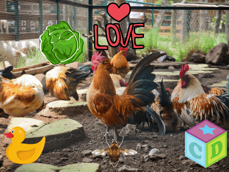 Chicken Toys: 20 Ways to Keep Your Chickens Entertained